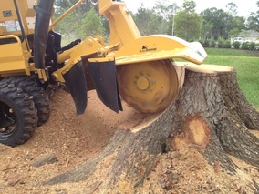stump removal service RI