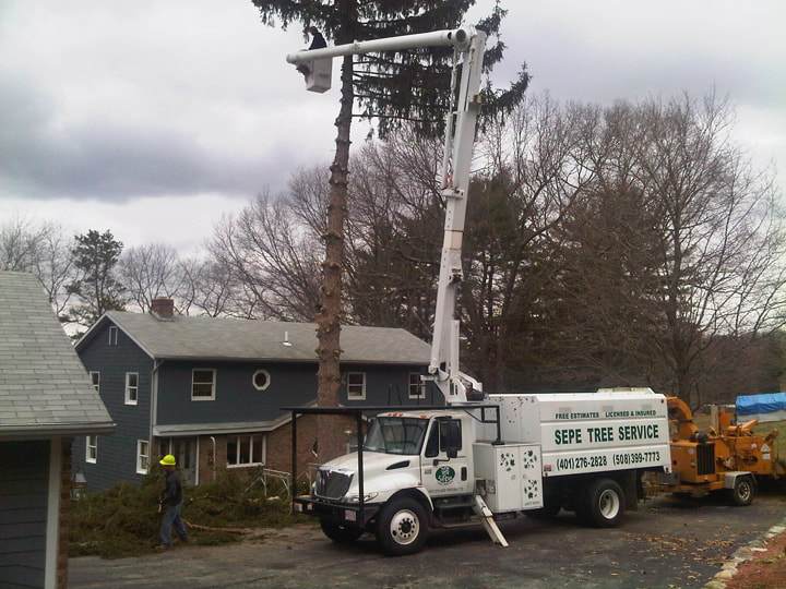 West Greenwich tree service company